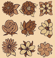 flower coffee vector image