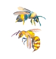 Bee isolated on white background Watercolor vector image