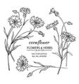 cornflower set vector image