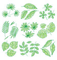 different tropical leaves summer green exotic vector image