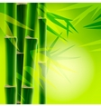 Bamboo background with copy space vector image
