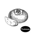 hand drawn sketch style fresh persimmon vector image