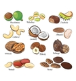 Collection of different nuts vector image