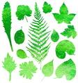 Set of garden watercolor leaves vector image