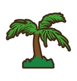 tree palm tropical isolated icon vector image
