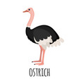 cute ostrich in flat style vector image