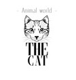 animal world the cat image vector image