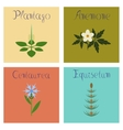assembly flat Plantago Anemone vector image