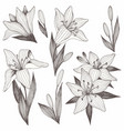 flowers hand drawing set of for printing vector image