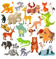 Set of funny animals birds and reptiles vector image vector image