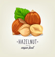 colourful hazelnut icon isolated on background vector image