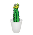 Three Cactus Plant and Flower in Flowerpot vector image