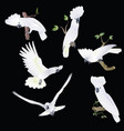 six white-cocked cockatoo in various poses vector image