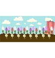 hyacinth vector image