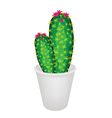 A Cactus Plant and Flower in Flowerpot vector image