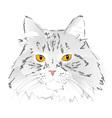 Muzzle gray cat vector image vector image