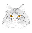 Muzzle gray cat vector image