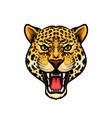 jaguar head isolated cartoon mascot design vector image