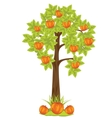 Aple tree vector image