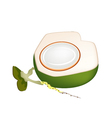 Fresh Green Coconuts on A White Background vector image