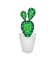 A Cactus Opuntia Microdasys in A Flower Pot vector image