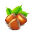 Hazelnuts isolated on white vector image