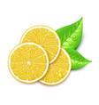 lemon slice vector image