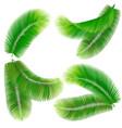 tropical palm leaf vector image