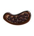 open cocoa fruit and beans icon image vector image