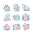 cute funny cartoon baby animals sleeping set vector image