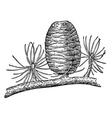pinecone vector image vector image