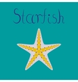 flat on background tropical starfish vector image