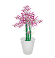 Green Bammboo Tree in A Flower Pot vector image