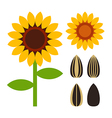 Sunflowers and seeds symbol vector image