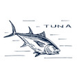 atlantic bluefin tuna for sushi vector image