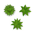 Houseplant set on a white background vector image
