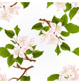 seamless texture apple tree branch with flowers vector image