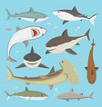 shark big hunter monster different pose set vector image