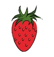 strawberry healthy fruit nature drawing vector image
