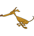 running greyhound cartoon vector image vector image