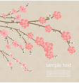Cherry blossom card vector image