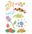 hand drawing flowers vector image