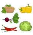 set of gardening vegetables vector image