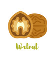 flat style of walnut vector image