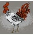 Profile of cock sketch vector image