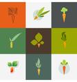 Carrot Set of decorative design elements vector image vector image