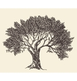 Vintage Olive Engraved Background vector image vector image