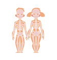 flat structure human body anatomy skeleton vector image