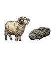 sketch cartoon horned ram cutted wool vector image
