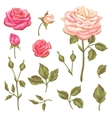 Set of floral elements with vintage roses vector image vector image